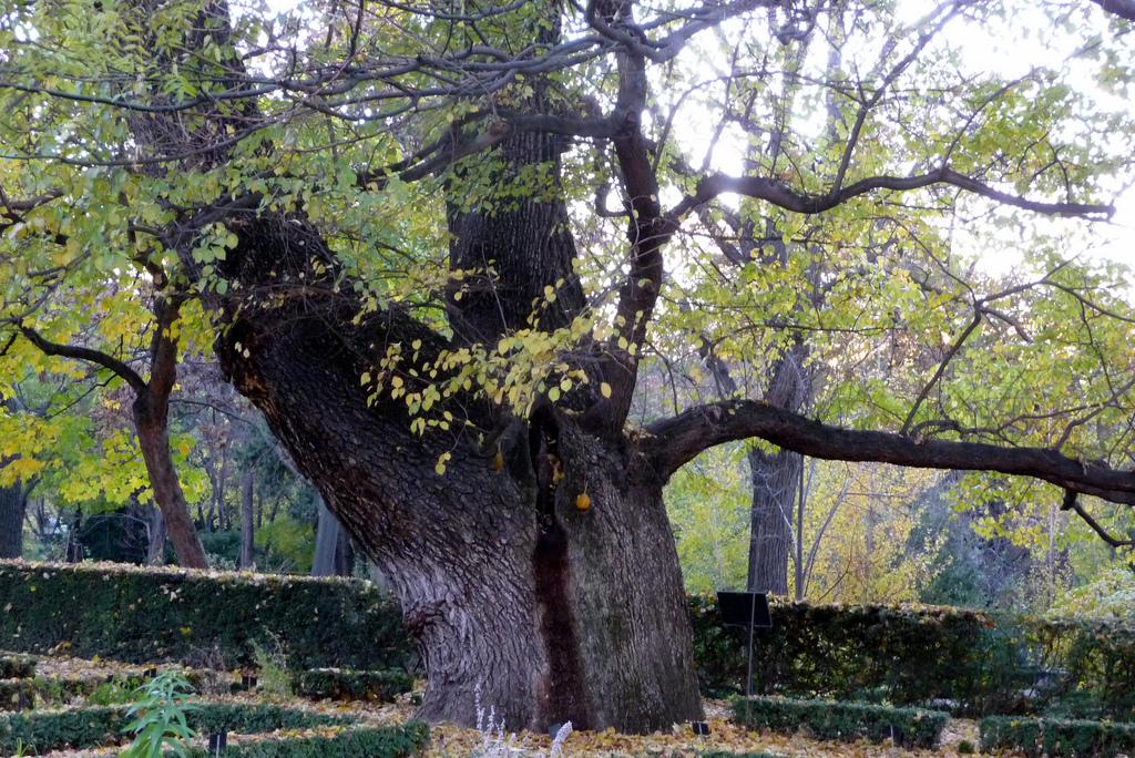 ต้นไม้ช่วยดูดสารพิษ